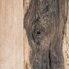 Cronus Old Oak Dining Table (detail of table top)