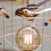 Mathieu Challières Birdcage Floor Lamp (detail with illuminated bulb)