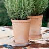 Rosa Helena Saucers for the High/Tall Pots (available separately)