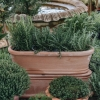 Smooth Italian Oval Gardener Troughs