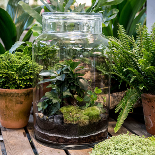 Flat Planted Bottle Terrarium