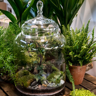 Jungle Planted Bottle Terrarium