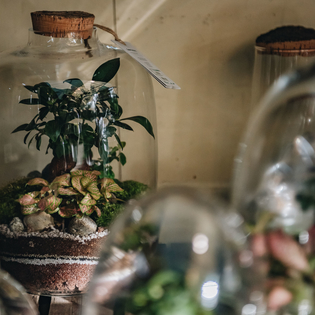 Forest Planted Bottle Terrarium Medium