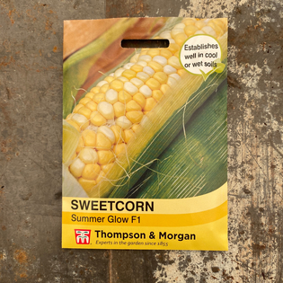 Sweetcorn - Summer Glow F1