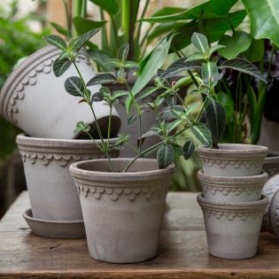Grey Copenhagen Pots (saucers available separately)