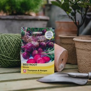 Beetroot 'Moneta' seeds - Thompson & Morgan