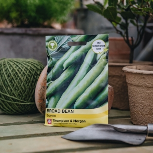 Broad Bean 'Express' seeds - Thompson & Morgan
