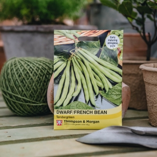 Dwarf French Bean 'Tendergreen' seeds - Thompson & Morgan