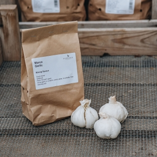 Garlic Bulbs - Marco