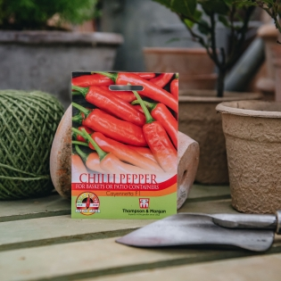 Chilli Pepper - Cayennetta