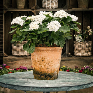 Rustic Terracotta Pot - Medium