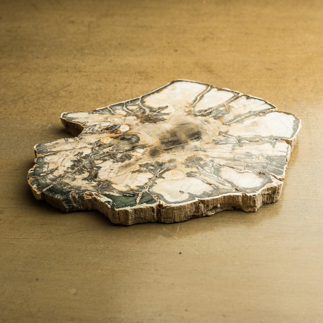 Fossilised Wood from a Monkey Puzzle Tree