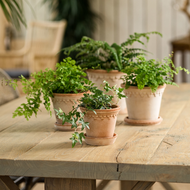 Rosa Copenhagen Saucers and Pots (available separately)