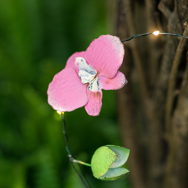 Outdoor LED Lights - Orchids