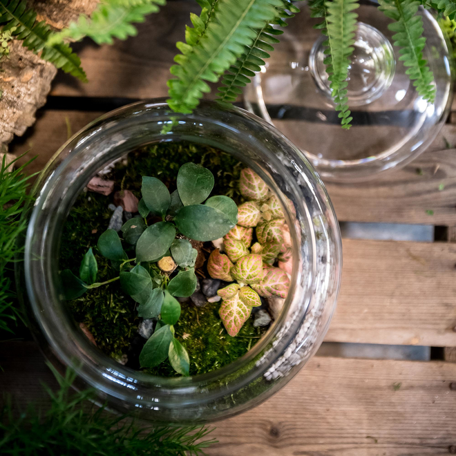 Prairie Planted Bottle Terrarium