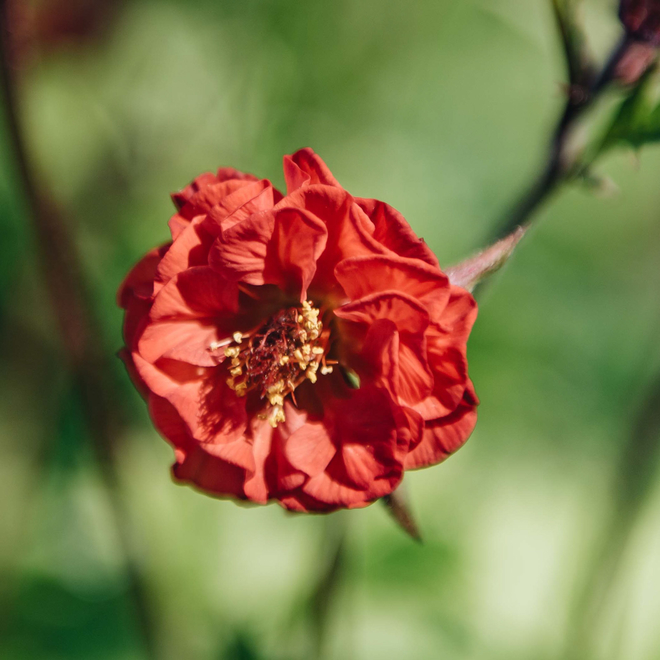 Geum Flames of Passion