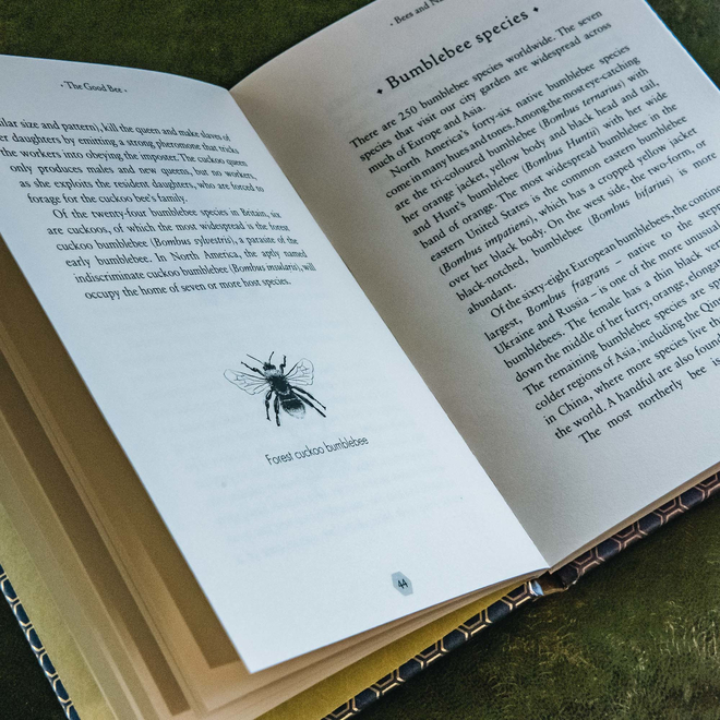 The Good Bee, view of text and illustration