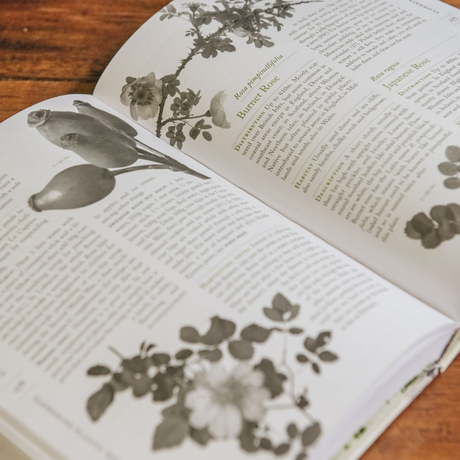 The Forager Handbook - preview