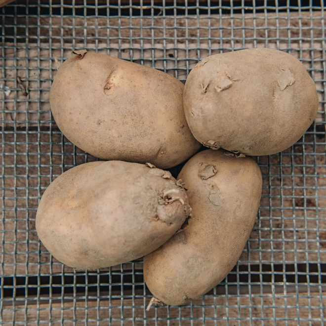 Seed Potato - International Kidney