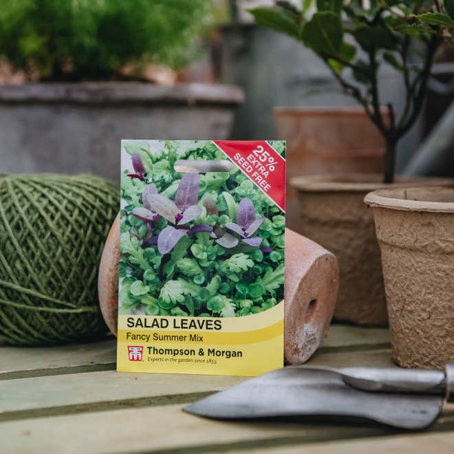 Salad Leaves, Fancy Summer Mix seeds - Thompson & Morgan
