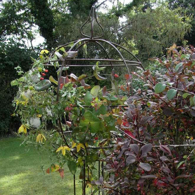 Rusted Iron Climbing Tower Plant Support